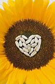 Sunflower with sunflower seed heart (close-up)