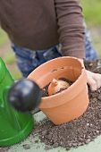 Child planting a bulb in a flowerpot