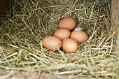 Fresh eggs in hay on a farm