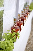 Wine bottles and herbs as decoration for a party tent