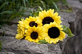Sunflowers on a stone wall