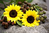 Sunflowers and blackberry sprigs