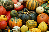 Still life with squashes, pumpkins and gourds
