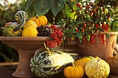 Autumnal still life with ornamental gourds, peppers & berries