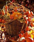 Basket with pumpkin, Chinese lanterns and cereal ears