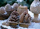 Arrangement of pine and spruce cones in snow
