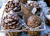 Pine cones in hoar frost and iron star