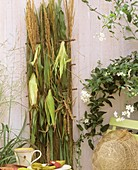 Wall trellis with corn and Chinese silver grass