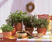 Herbs for bouquet garni