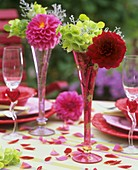 Red and pink dahlias in champagne flutes