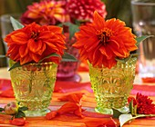 Two orange dahlias in vases