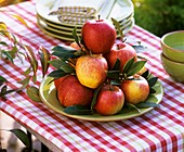Apples on green plate decorated with bay leaves