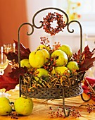 Quinces in metal basket with autumn decorations