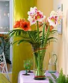 Amarylis in der Vase