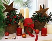 Wintergrün in Kokostöpfen weihnachtlich dekoriert