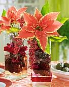 Weihnachtsstern in Glasvase mit Beerenschmuck, Dekozapfen
