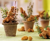 Amusingly shaped 'Bamberger Hörnchen' potatoes & herbs in pots