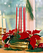 Adventsgesteck mit Weihnachtsstern und Seidenkiefer