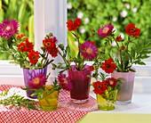 Flockenblume und Nelkenwurz in Gläsern am Fenster