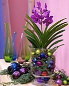 Blaue Orchidee ine einem Glas mit Arizonazypresse & Kugeln