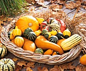Ornamental gourds in shallow basket