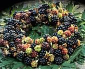 Kranz aus Brombeerfrüchten
