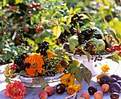 Zinnias, rose hips, blackberry shoots (Rubus), dogwood (Cornus)