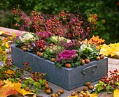 Metal box with ornamental cabbage, rose hips, hazelnuts & sisal