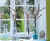 Zweige von Kätzchenweide in Glasflaschen am Fenster