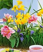 Weizengras mit Tulpen, Narzissen und Traubenhyazinthen