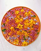 Blüten von Narzissen und Hyazinthen auf orangem Teller
