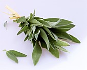 Bunch of sage tied with bast (cut-out)