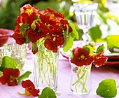 Nasturtiums in glass vases