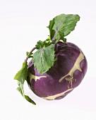 Ein violetter Kohlrabi (Brassica oleracea convar. acephala var. gongylodes)