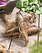 Salsify roots (Tragopogon porrifolius) on wooden table