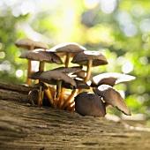 Pilze auf Baumstamm