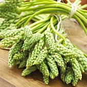 Bundles of wild asparagus