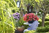 Sommergarten mit Hortensien und Springkraut