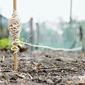 String in vegetable bed
