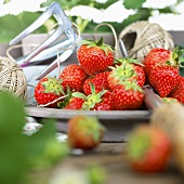Fresh strawberries, kitchen string and garden tool