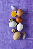 Different types of eggs on purple background
