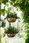 Hanging baskets in garden