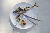 Teller mit Resten von einer Makrele