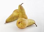 Three pears (autumn variety)
