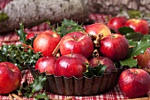 Bowl of red apples, cinnamon sticks, holly (Christmas)