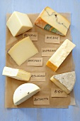 Pieces of different cheeses on paper