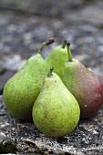 Four pears, variety 'Gaishirtle'