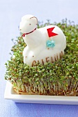 Cress with Easter lamb