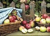 Frisch gepflfückte Äpfel auf einem Gartentisch