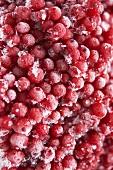 Frozen redcurrants (full-frame)
